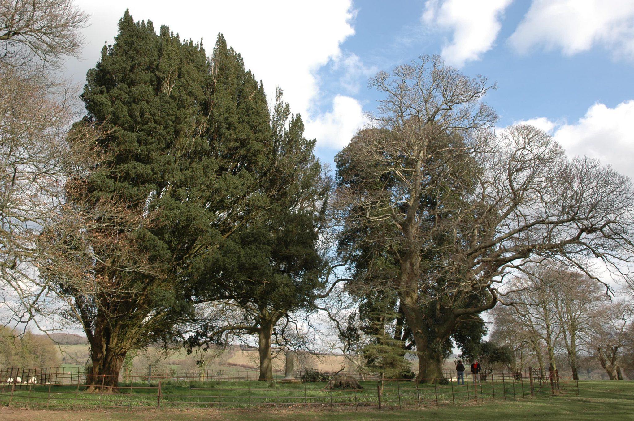 Tree Council Trees