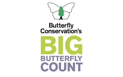 The Big Butterfly Count is ON!