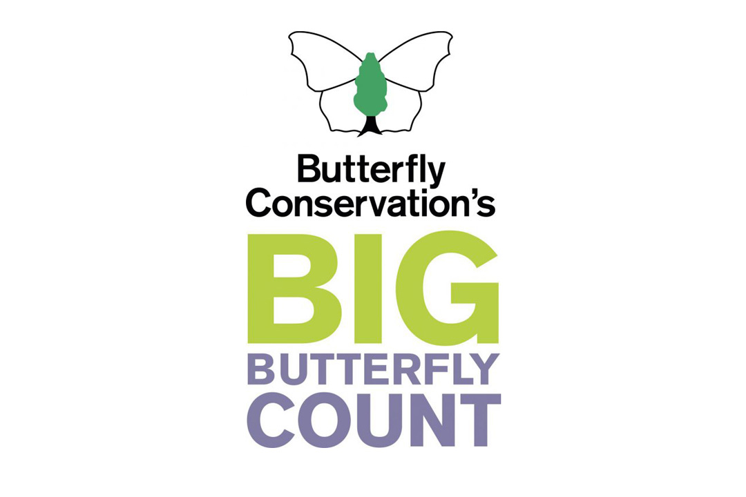 Big Butterfly Count Suffolk